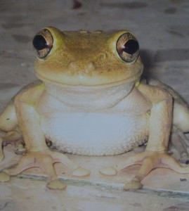 "Thought I should include a happy photo to balance out my feelings expressed in the blog...this is a frog I saw with my friend Kristi on our balcony in Cuba in 2004.  We named him ""José Luis"" and he never fails to make me smile.  I hope he does the same for you!!"